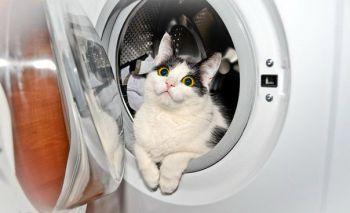 Περιποίηση και πλύσιμο (γάτες)