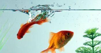 Μέθοδοι αποσκλήρυνσης του νερού (ενυδρεία)