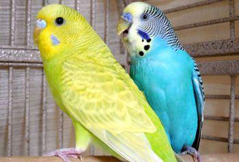 Η διαφύλαξη των παπαγάλων