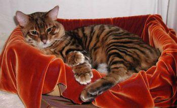 Τα όργανα της αναπαραγωγής και η αναπαραγωγή της γάτας