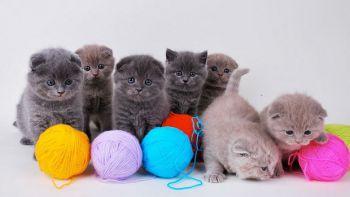 Παιχνίδια και μέρη για να γυμνάζουν τα νύχια τους οι γάτες