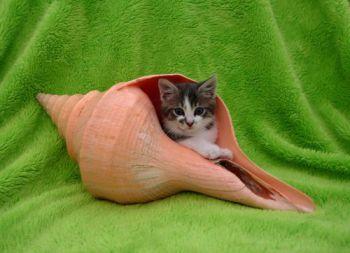 Προσοχή στα επικίνδυνα αντικείμενα (γάτες)