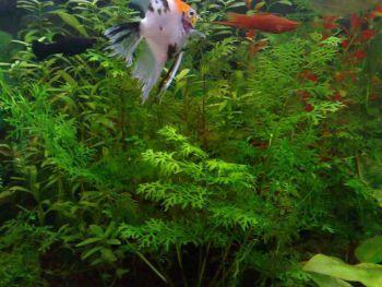Επιλογή και ταξινόμηση των υδρόβιων φυτών