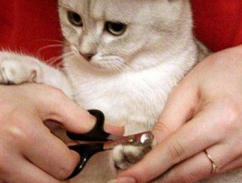 Το κόψιμο των νυχιών (γάτες)