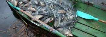 Η παράνομη αλιεία και το οικοσύστημα