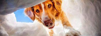 Μπορεί ο σκύλος να διαισθάνεται γεγονότα πριν αυτά συμβούν;