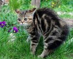 Η έκφραση των συναισθημάτων (γάτες)