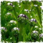 Το όξινο νερό - ενυδρεία