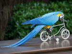 Υπαίθρια αναθρεπτήρια - παπαγάλοι