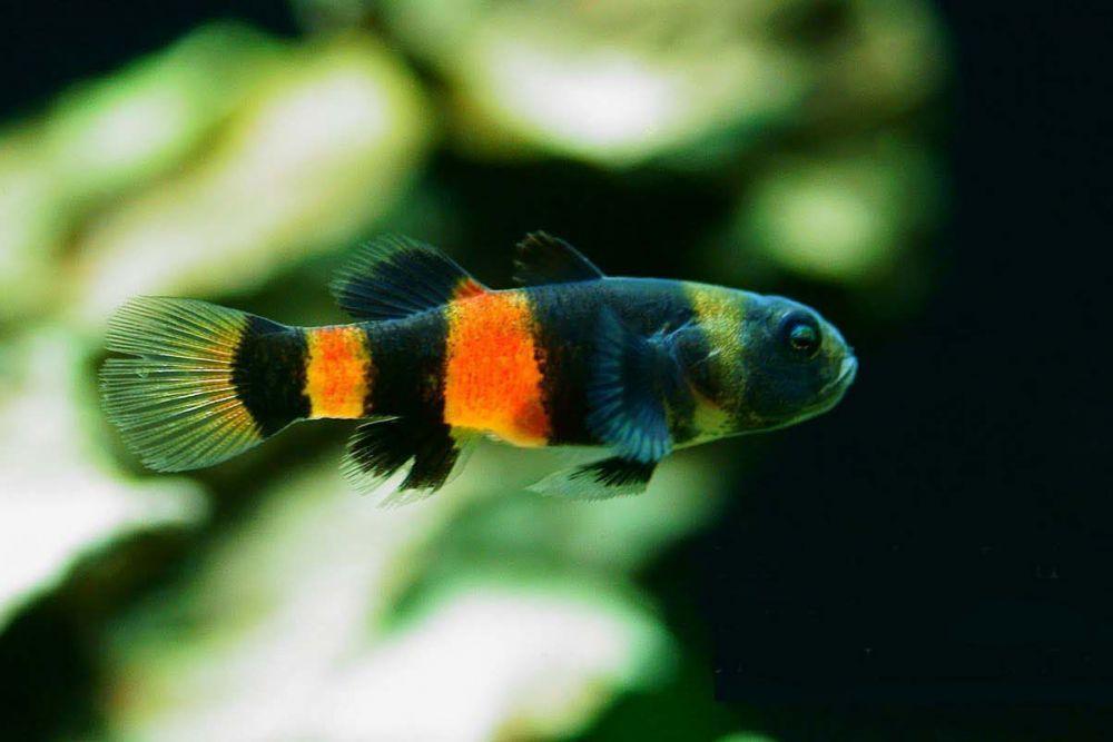 Βυθόψαρα - ψάρια του βυθού