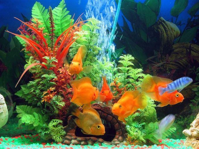 Ψάρια - Οι κυρίαρχοι του ενυδρείου