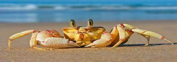 Τα θαλασσινά με οστρακόδερμα