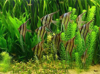 Εκτροφή νεαρών ψαριών