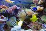 Η διατροφή των ψαριών του θαλάσσιου ενυδρείου