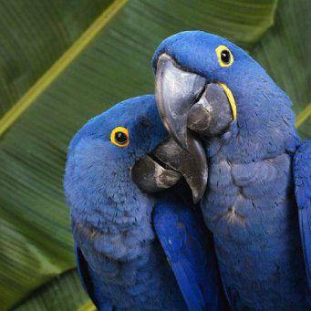 Κριτήρια για πιο προσεκτική επιλογή του παπαγάλου