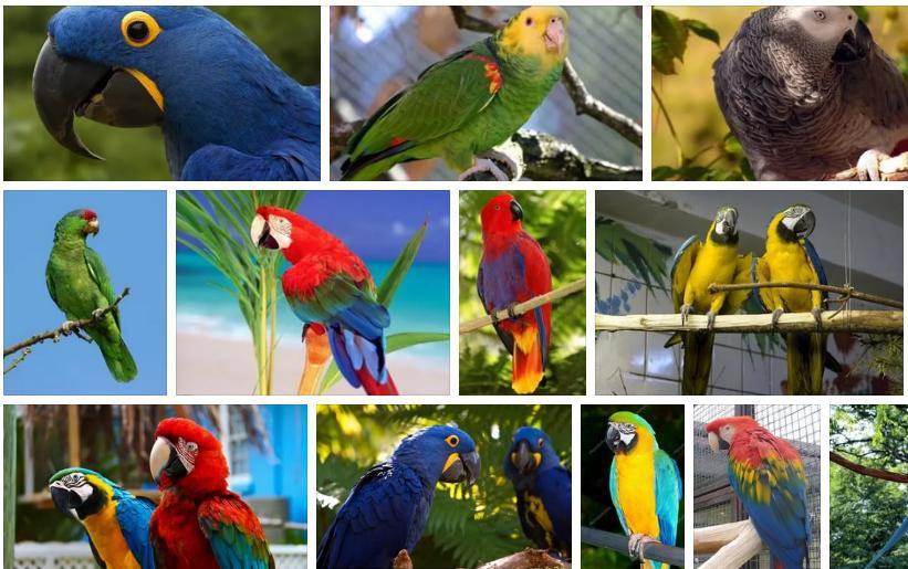 Τι θα πρέπει να ξέρετε γενικά για τα παπαγαλάκια και τους παπαγάλους