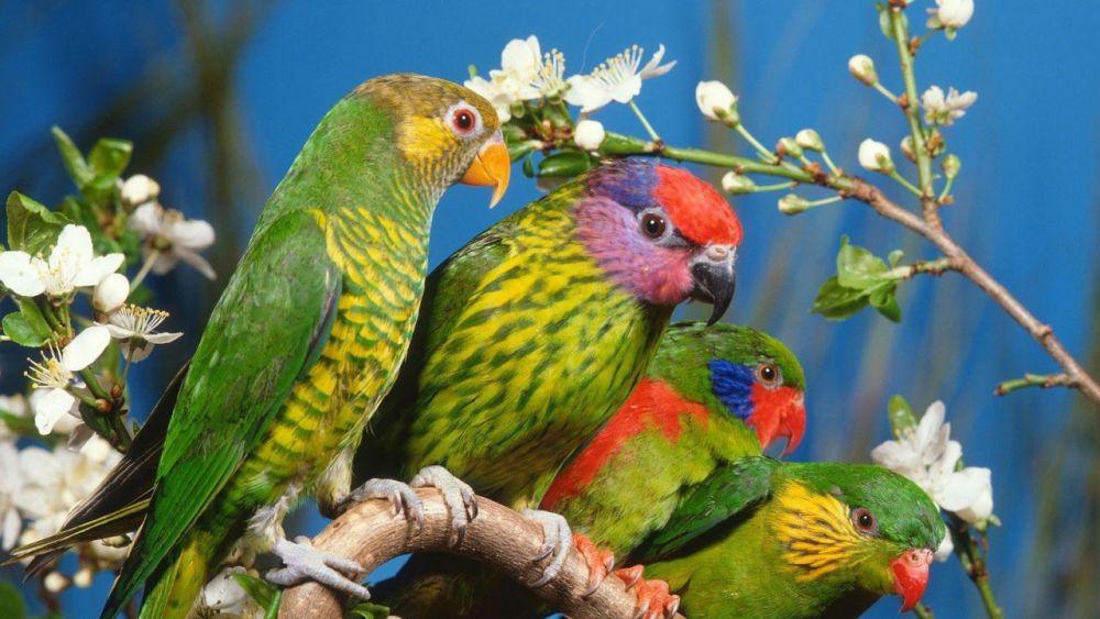 Εκτροφή - παπαγαλάκια