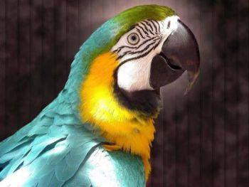Τα νοτιοαμερικάνικα παπαγαλάκια
