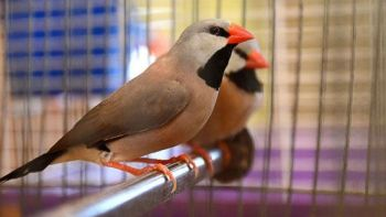Tα πουλιά όταν ζουν ελεύθερα στη φύση