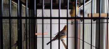Φροντίδα πουλιών στο κλουβί
