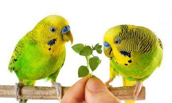 Τροφή και Περιποίηση (παπαγάλοι)
