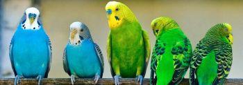Τι πρέπει να προσέξετε όταν αγοράζετε παπαγαλάκια