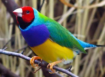 Ένα ή περισσότερα πουλιά