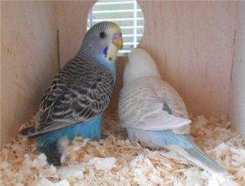 Φωλιές - παπαγάλοι