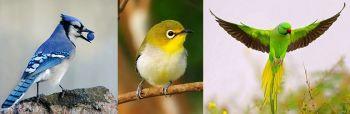 Η γενική φύση των πτηνών