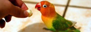 Η τροφή των παπαγάλων