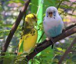 Ανατομία και συμπεριφορά των παπαγάλων