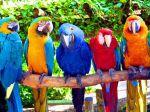 Τι πρέπει να προσέξετε αγοράζοντας παπαγαλάκια