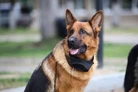 Χωρίς λουρί - σκυλιά