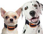 Απόφαση και εκλογή (σκυλιά)