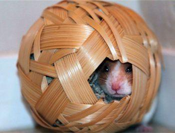 Ένα κλουβί δική σας κατασκευής για χαμστερ