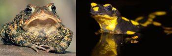 Αμφίβια - ομάδες και είδη
