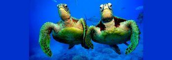 Χελώνα γένους ερπετών