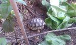 Ερπετά - Χελώνες